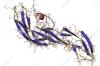 Хорионический гонадотропин и особенности его выработки