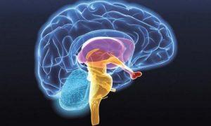 Гамартома гипоталамуса – симптомы и лечение опухоли мозга