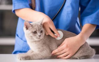 Симптомы и способы лечения гипертиреоза у собак и кошек