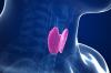Функции тироксина и последствия нарушения его выработки