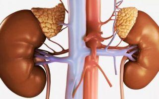 Описание симптомов опухоли надпочечников и способов лечения болезни