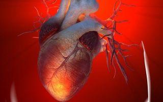 Роль натрийуретического пептида в организме человека