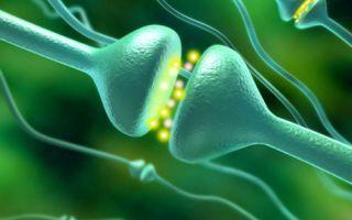 Характерные признаки и причины появления гипоталамического синдрома