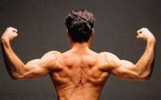Роль стероидных гормонов в организме