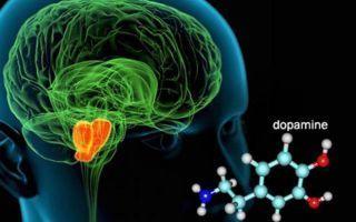 Вопрос №28 — Источники дофамина