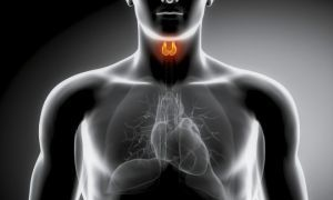Помощь в восстановлении эндокринной системы