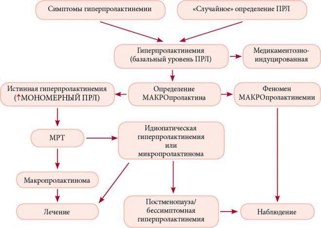 Алгоритм диагностики пролактином