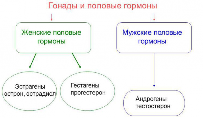 Уровень и норма гормонов при беременности