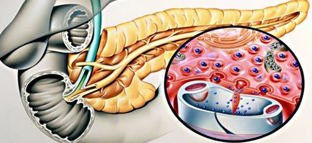 Функции инсулина в организме человека