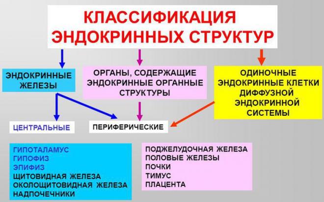 Главные эндокринные