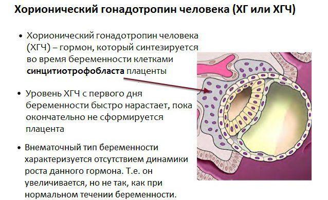 Гормон хгч при беременности