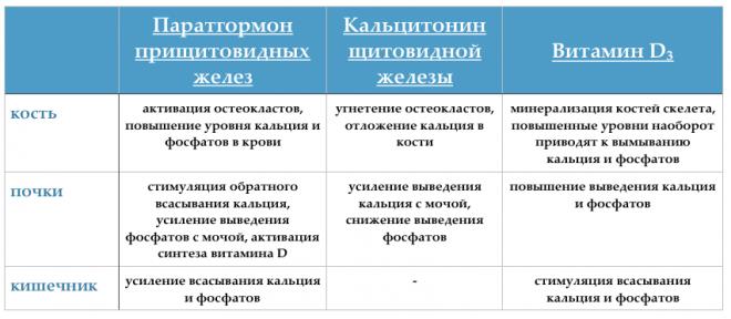 Гормоны обмена кальция и фосфора