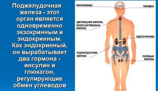 Гормоны выделяемый поджелудочной железой
