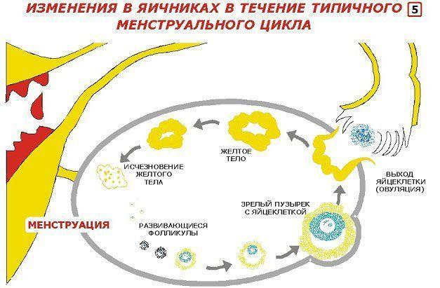 Изменение в яичниках