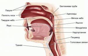 Фонофорез с гидрокортизоном: что это такое, лечение ультразвуком