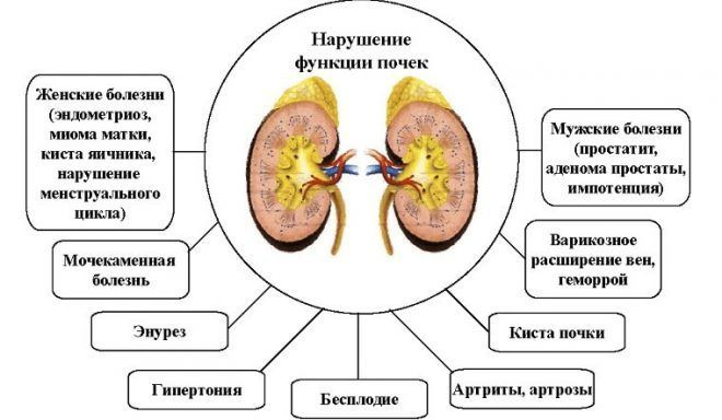 Л тироксин вызывает нарушение функций почек
