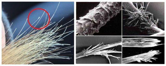 Микросъемка посеченных волос