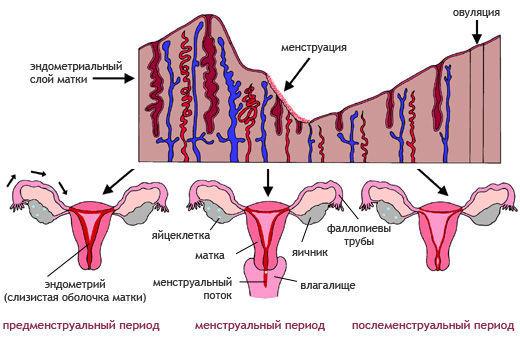 Нарушения менструации