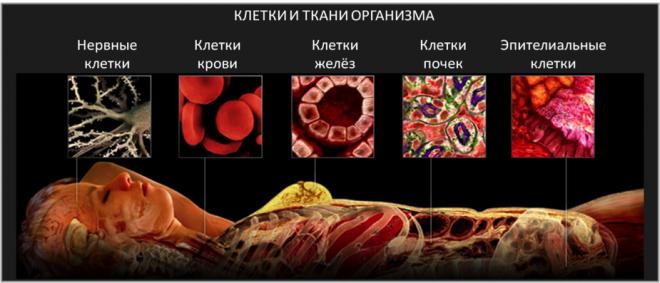 Аналіз крові СА 125: що означає, розшифровка, яка норма і як його складати » журнал здоров'я iHealth 2