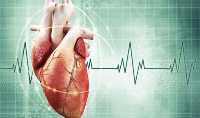 Невероятные факты о сердце человека