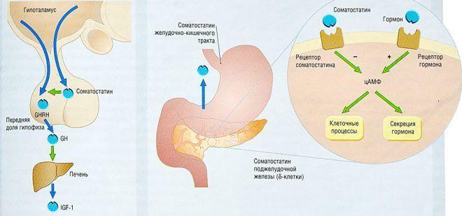 Отклонения в системе гормон роста