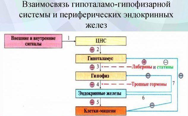 Патологию эндокринных желез