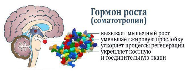 Пептиды и Гормон роста