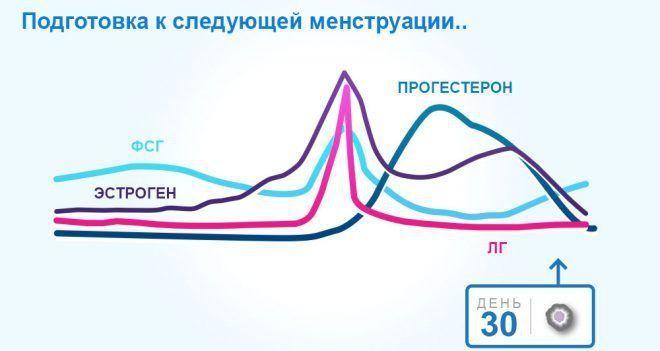 Понятия менструального цикла