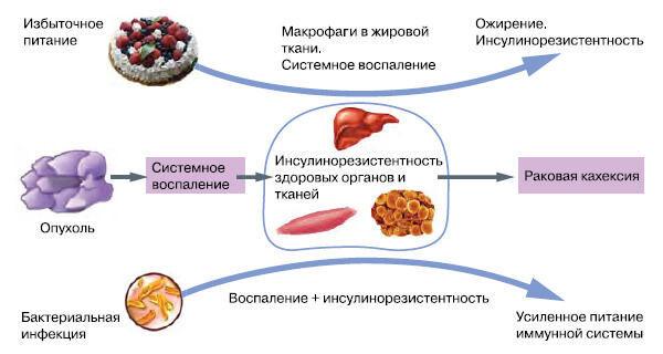 Повышенный инсулин в крови