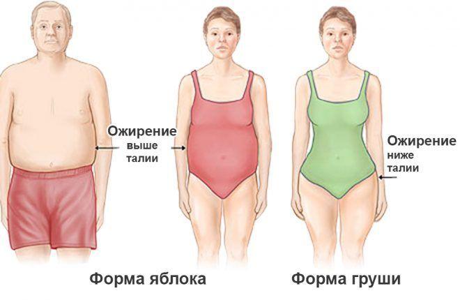 какой гормон сжигает жир