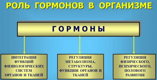 Роль гормонов в организме