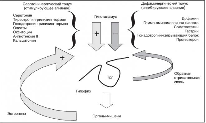 Секреция пролактина усиливается под действием эстрогенов