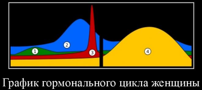 Схема основного горманального цикла женщин