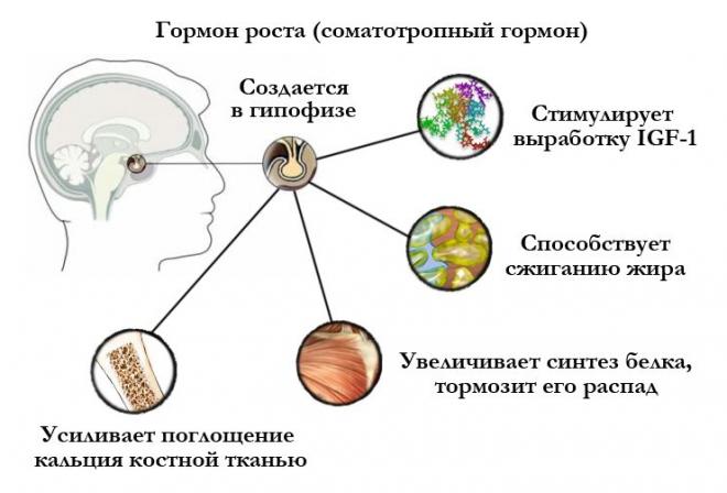 Соматотропный гормон роста