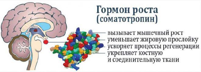 Соматропин - гормон роста