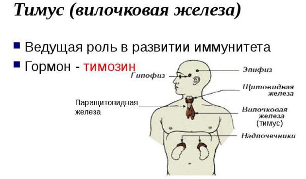 Тимозин