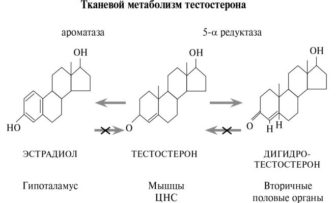 Тканевой метаболизм