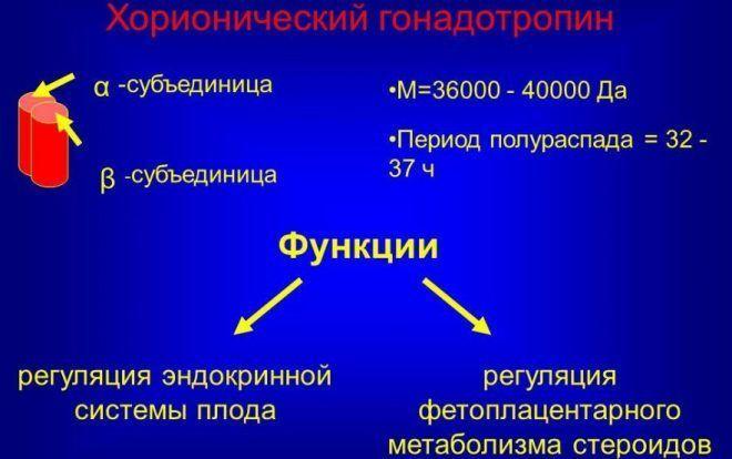 Укол ХГЧ