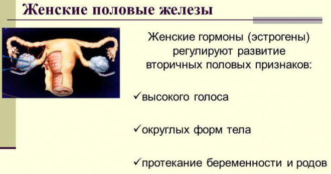 Женские гормоны