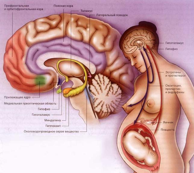 Аденома гипофиза во время беременности