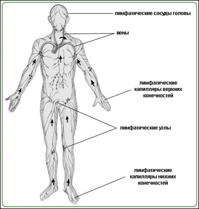 Активизации обменных процессов в клетках и тканях