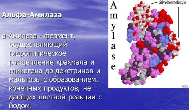 Амилаза