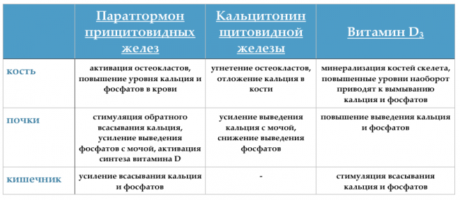 Анализ крови на уровень паратгормона