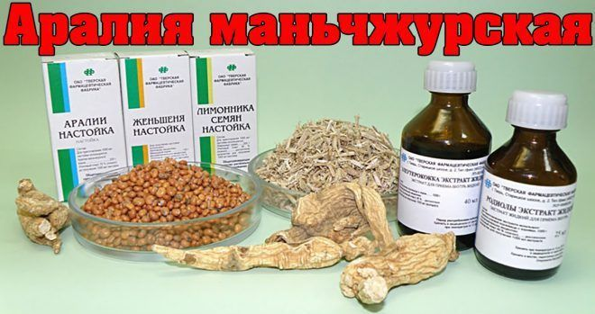 Аралия Маньчжурская