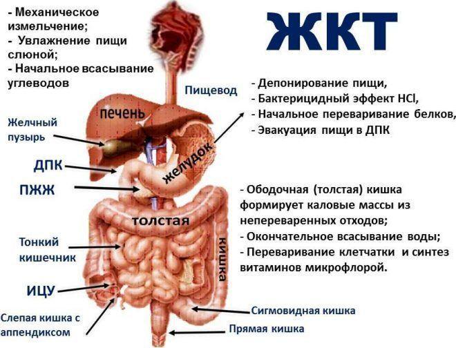 Болезни желудочно кишечного тракта