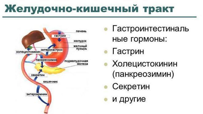 Гиперсекреция гастрина