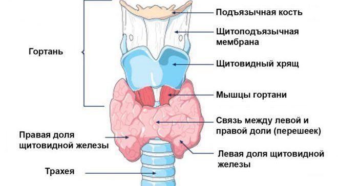 Гипотиреоз - признаки и способы лечения