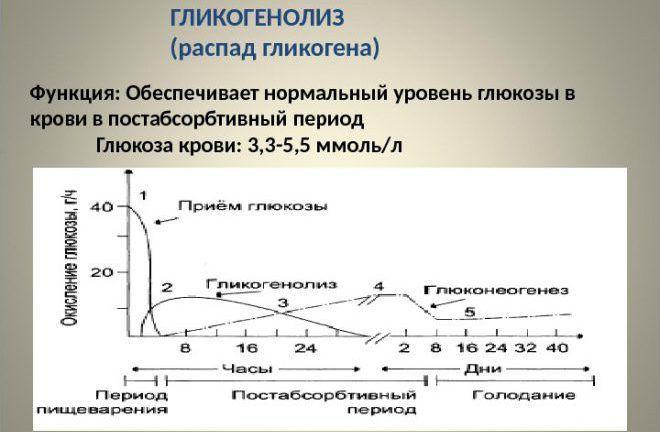 Гликогенолиз