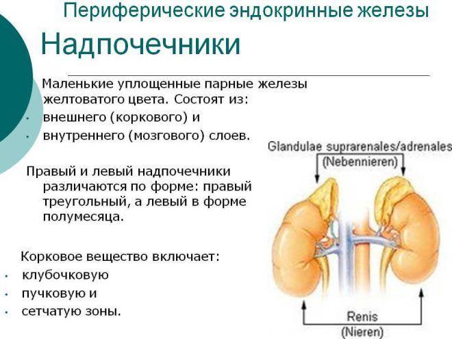 Гормонально-активные опухоли надпочечников