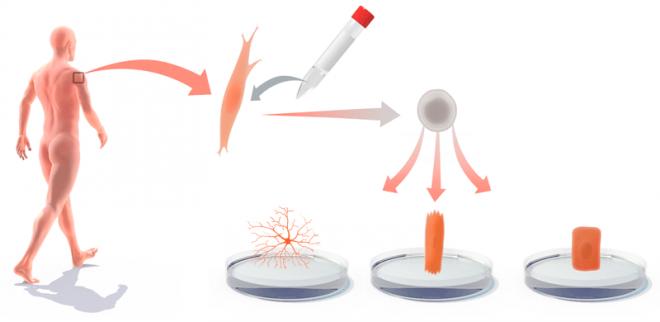 Использование стволовых клеток